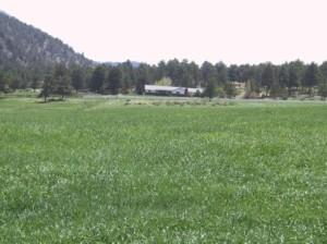 hay_field