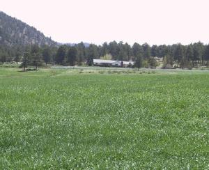 hay_field300