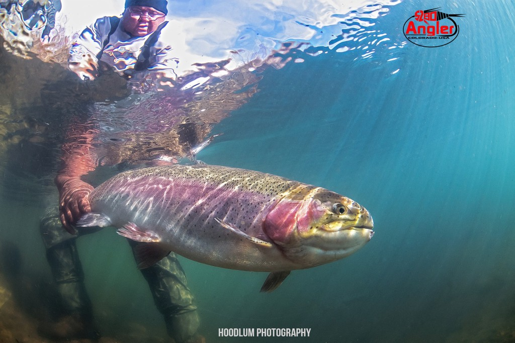 Boxwood Gulch Trout - Underwater Beast.1