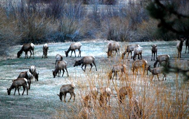 Elk good from karen 4-09.4