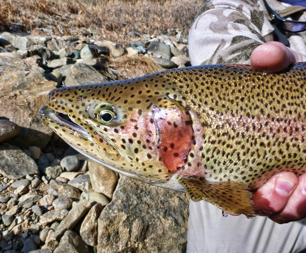 South Platte River Fishing in Denver CO